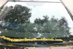 2001 Nissan Sentra 4 Door Sedan Windshield Replacement