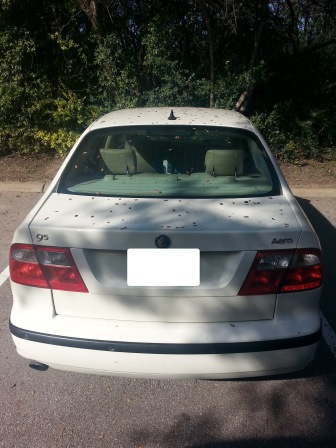 Saab Windshield Replacement Prices Amp Local Auto Glass Quotes