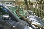 2009 Mazda 5 Windshield