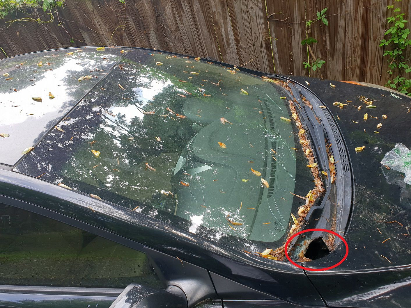 Hyundai Windshield Replacement Prices & Local Auto Glass Quotes